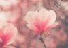 L'influenza della spiritualità sull'efficacia delle terapie anticancro